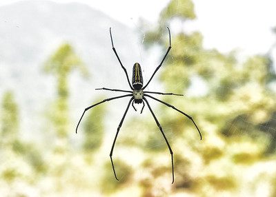 NEP_1774-7x5-Spider