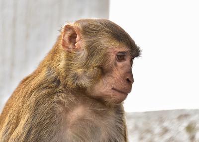 NEP_3875-7x5-Monkey