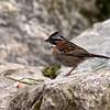 ECQ_5880- Bird