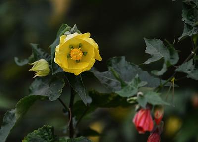 ARW_1531-7x5-Flower