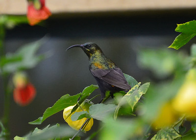ARW_1534-7x5-Bird