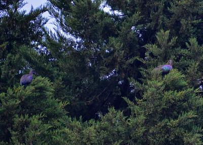 ARW_1539-7x5-Birds
