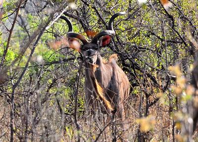 SAN_5051-7x5-Kudu