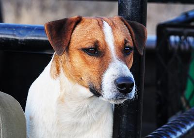 SAN_0933-7x5-Dog