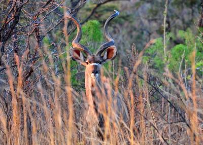 SAN_0306-7x5-Kudu