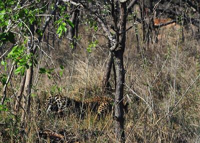 SAN_6376-7x5-Leopard