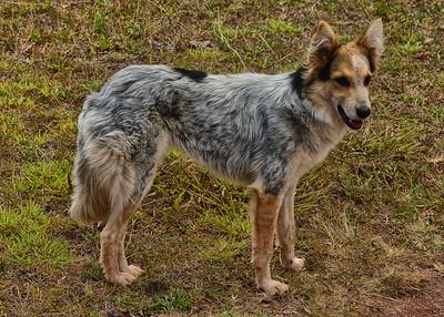 EAS_3028-7x5-Dog