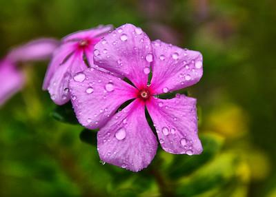 EAS_3121-7x5-Flower-Rain Drops