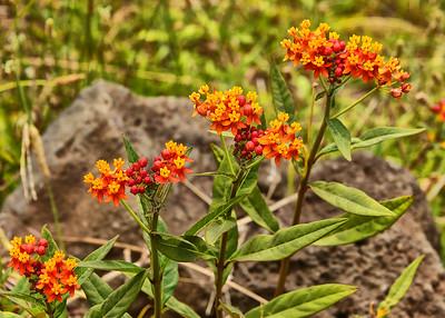 EAS_1608-7x5-Flowers