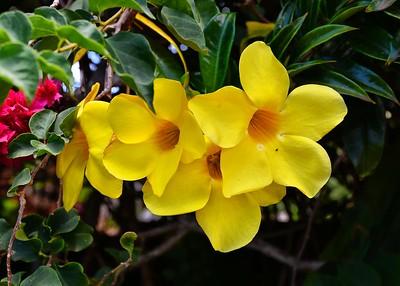 EAS_0089-7x5-Flowers