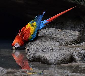 ECQ_1693-Parrot Reflection