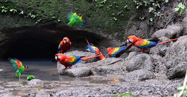 ECQ_1756-Parrots-Flight