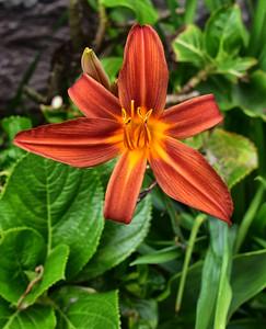 ECQ_0107-Flower