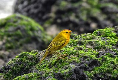 ECQ_2689-Bird