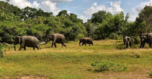 SRI_0470-muddy Elephants