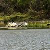 SRI_0513-7x5-Charging Croc