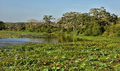 SRI_0822-Yala Nat Park-Pond Reflection