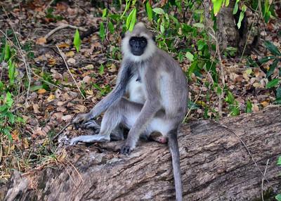 NEA_0806-7x5-Monkey