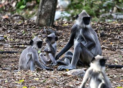NEA_0819-Mom and kids-Monkeys