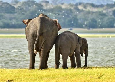 NEA_0857-7x5-Elephants-Mom-Daughter