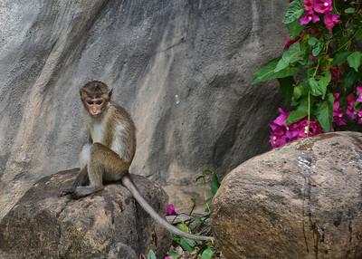 NEA_0628-7x5-Monkey