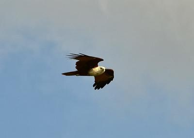 NEA_1256-7x5-Bird