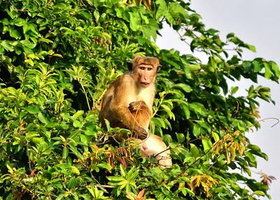 NEA_6184-7x5-Monkey