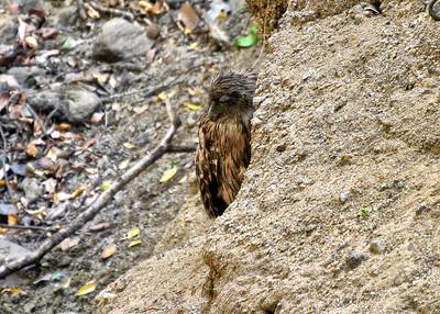 NEA_1237-7x5-Eagle