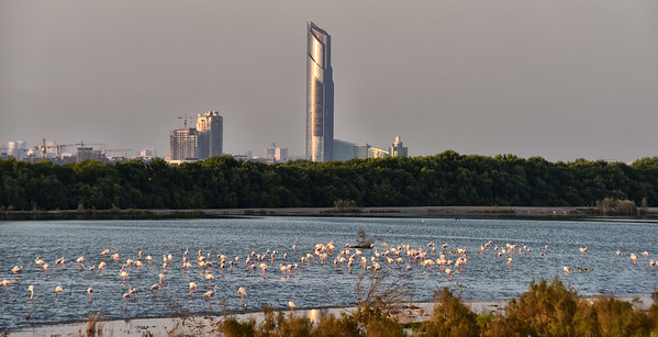 SRI_3564-Flamingos-Towers-Dubai