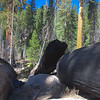 Yosemite Mariposa Grove