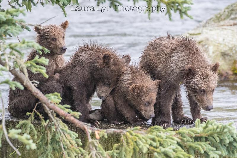 Katmai National Park Day Six August 2018 (68 of 87)