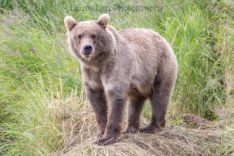 Katmai National Park Day Five August 2018 (4 of 67)