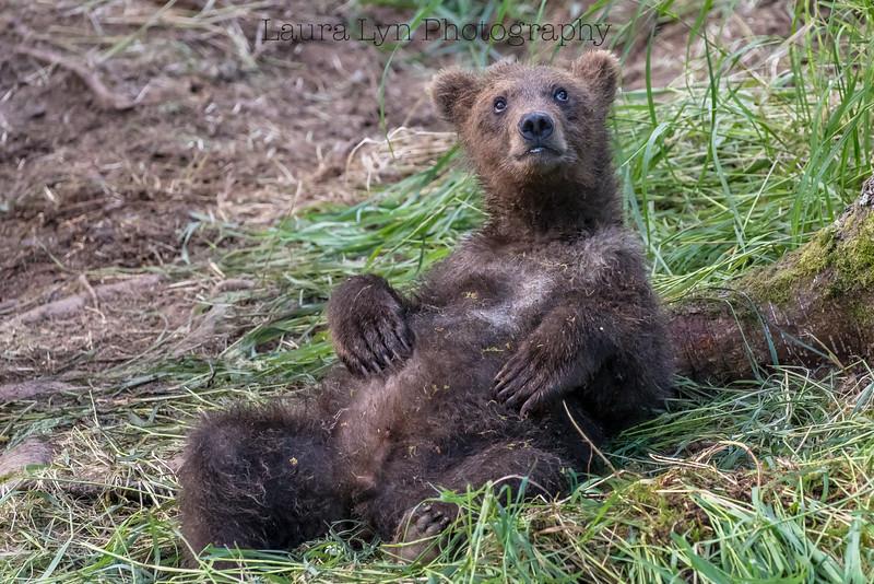 Laid Back Bear