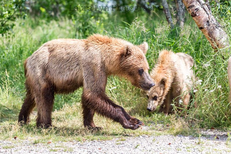 Taken in Katmai National Park in July 2015