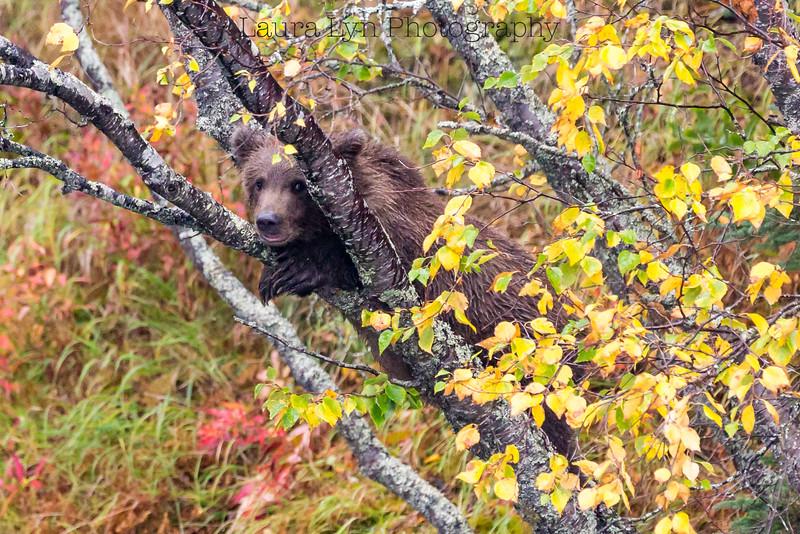 Tree Hugger Cub