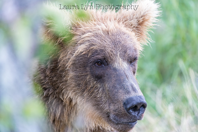 Katmai National Park Day One July 2018 (19 of 20)