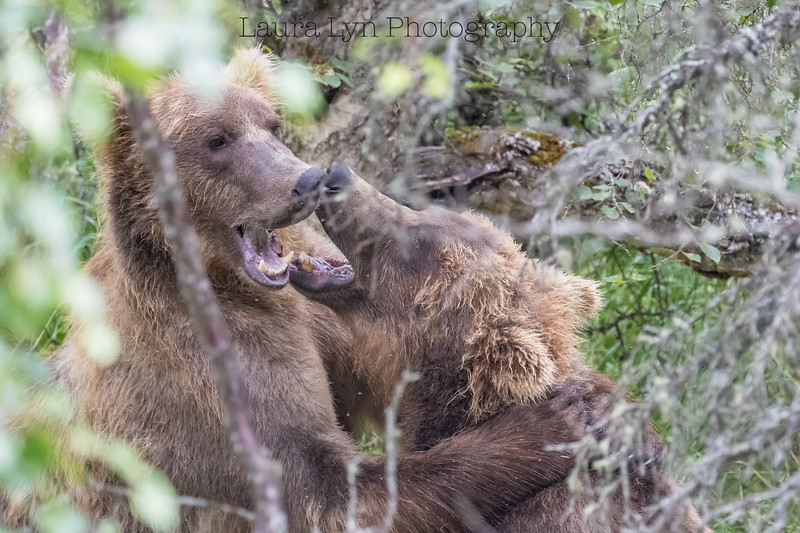 Katmai National Park Day Two July 2018 (21 of 27)