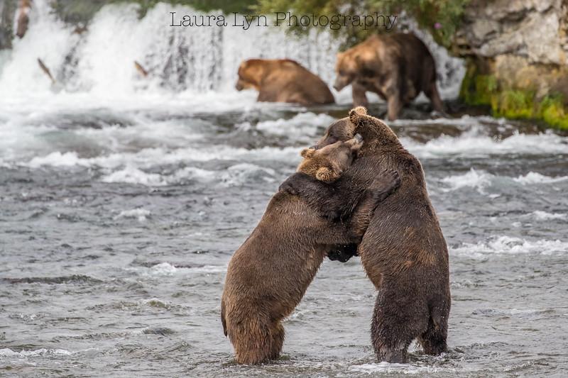 Katmai National Park Day Four August 2018 (38 of 53)