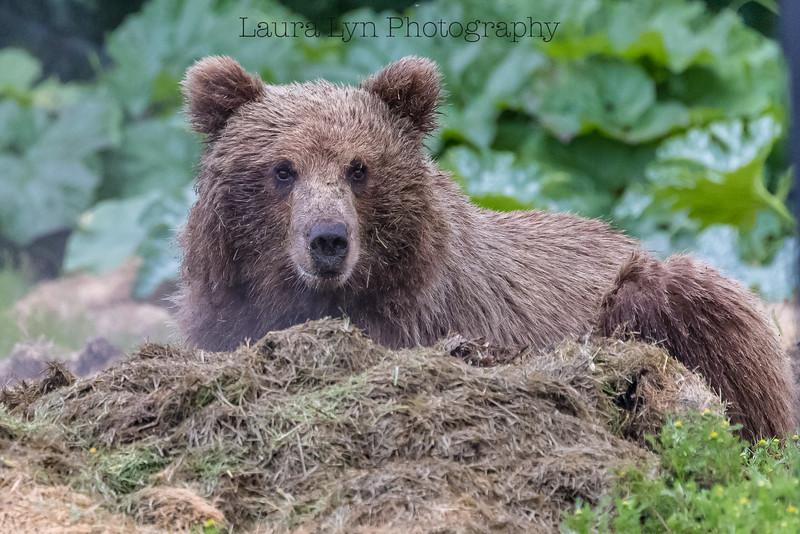 Composte Bear