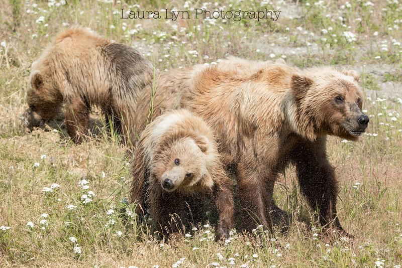 Bear Family Shake
