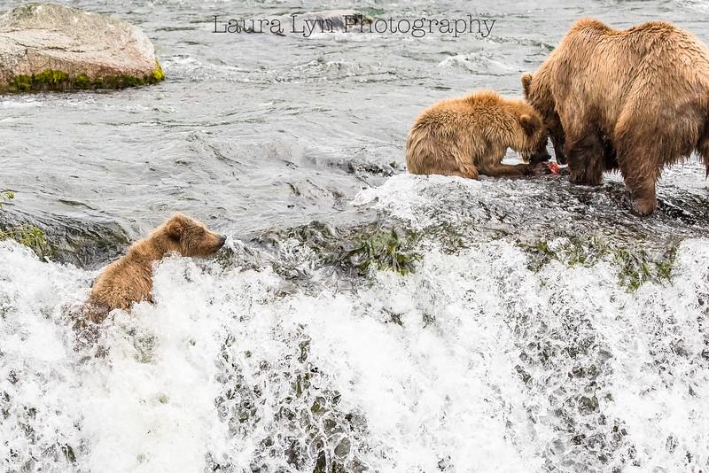 Cub Falls