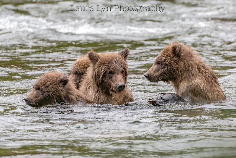 Taken in Katmai National Park in Fall 2015