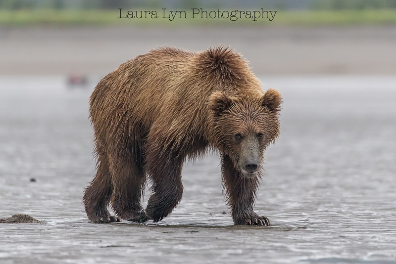 Taken in Lake Clark National Park in July 2016