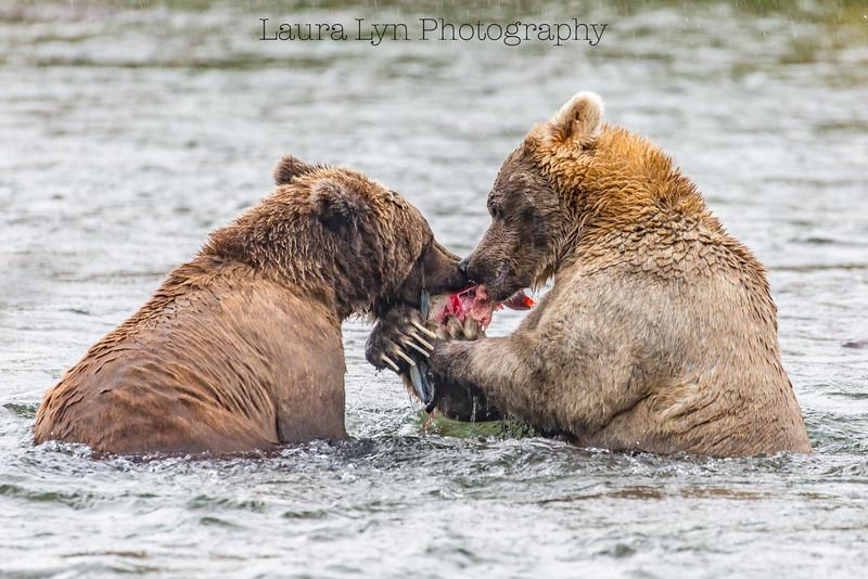 Share Bears