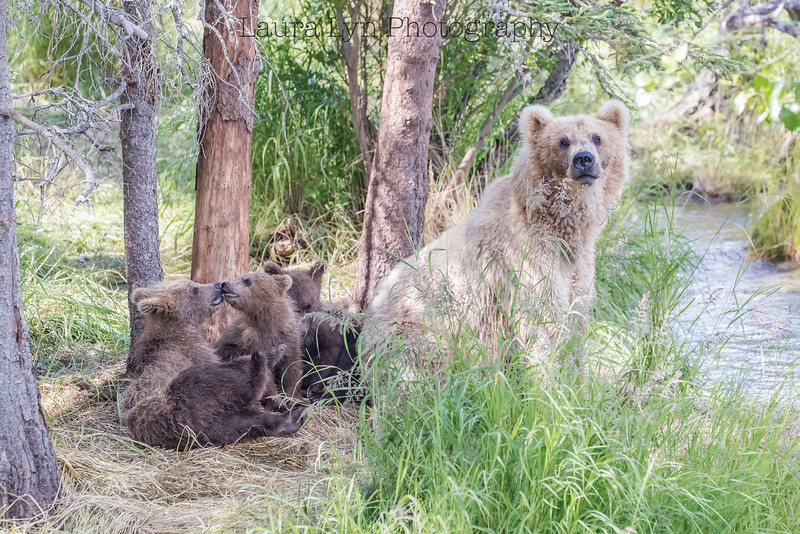 Bear Family Photo