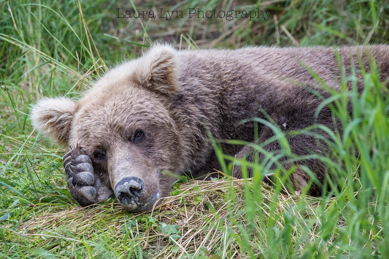 Katmai National Park Day Five August 2018 (26 of 67)