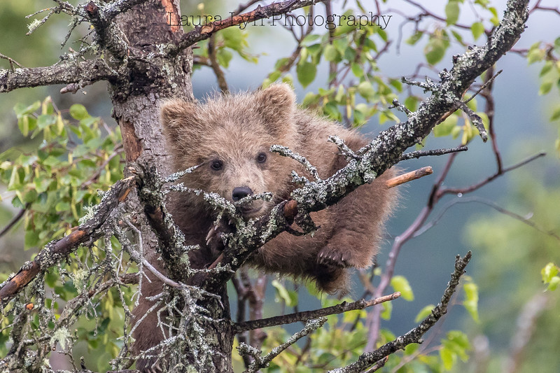 Taken in Katmai National Park in July 2016
