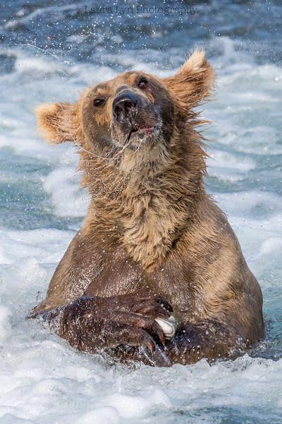 Salmon Bear Shake