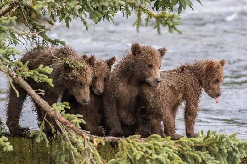 Katmai National Park Day Six August 2018 (81 of 87)
