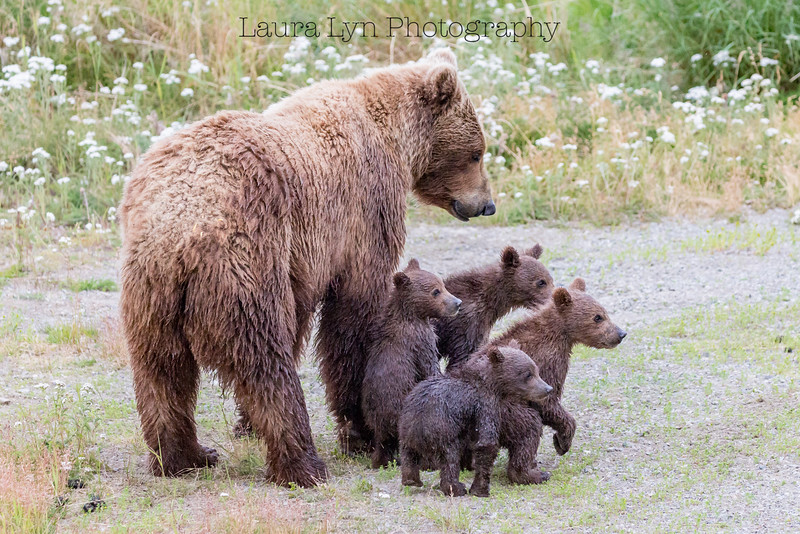 Proud Momma Bear